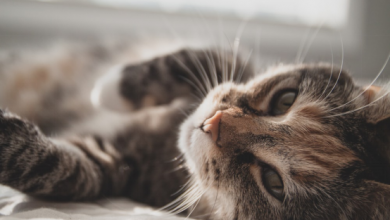 Photo of Beginner's Guide to CBD Oil for Cats