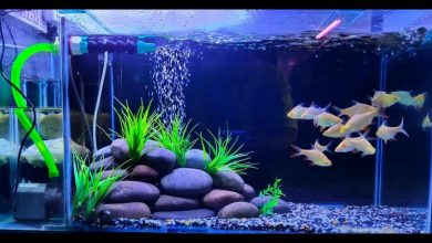 Photo of Various Steps to Decorate your Aquarium