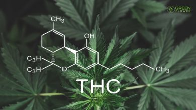 Photo of Surprising medical benefits of THC: Everything you need to know