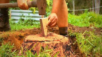 Photo of Most Effective Ways To Remove A Tree