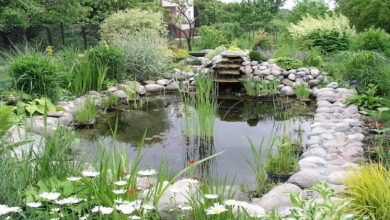 Photo of Things to know before making your water garden