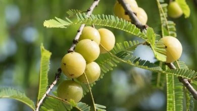 Photo of Indian Gooseberry: A Nutrient-Rich Superfruit For Healthier Hair