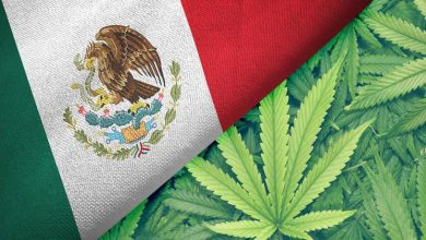Photo of Mexican Senate approved full legalization of cannabis with overwhelming majority.